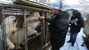 'This isn't culture - this is animal cruelty': Olympic skier speaks out after visit to South Korean dog meat farm