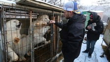 Olympic skier calls for end to 'cruelty' at dog meat farm