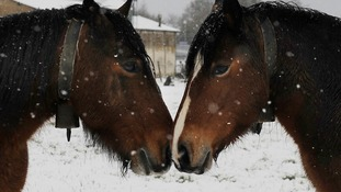 Horses in the snow in northern Spain.
