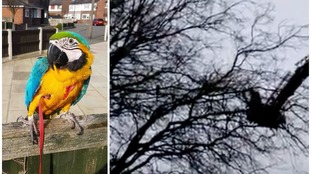 Firefighters lend cherry picker to help save wounded parrot from tree top