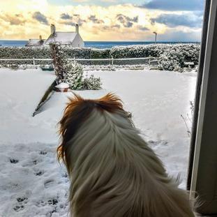 Alderney snow
