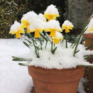 Guernsey snow