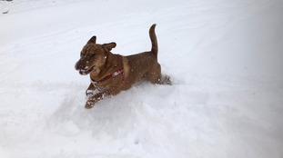 Cooper in the snow in Newcastleton