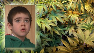 Medical cannabis oil trial 'being considered' by government to help six-year-old with severe epilepsy