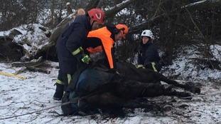 Horse rescued after tree collapses in Oxfordshire