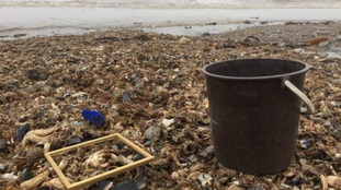 Thousands of dead fish and sea creatures wash up on Yorkshire beaches