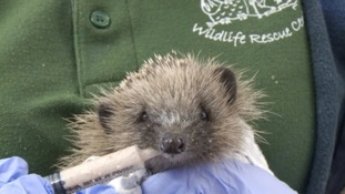 Oak and Furrows Wildlife Rescue Centre
