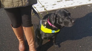 Warning to dog owners to be more responsible after guide dog attacks