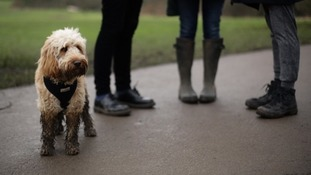 Village introduces 'poo-shaming' map in bid to reduce dog fouling
