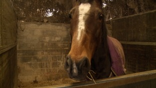 Racehorse retraining charity looking for new home