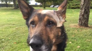 Finn the police dog is to receive another award