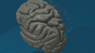 Oxford scientists test your brain power