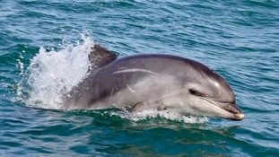 Islanders asked to watch out for dolphin stranding