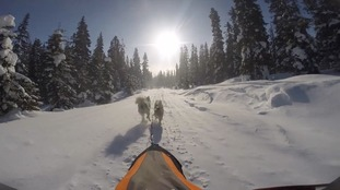 How to moonlight as a sled dog racer