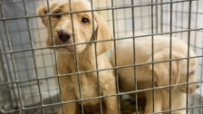 Four arrested in puppy trading investigation