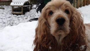 Your pets seem to be loving the snow