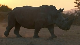 Sudan could still produce offspring after his death.