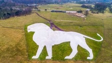 Whipsnade Zoo's giant chalk lion gets a makeover