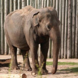 pic of elephant