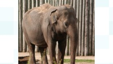 UK's largest indoor elephant enclosure to open in Blackpool