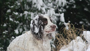 Hugo the dog in the snow