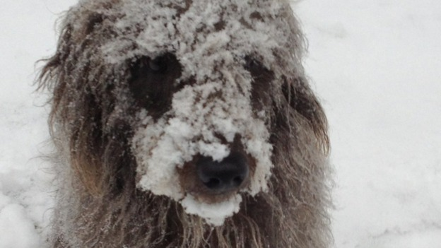 Snowy dog 
