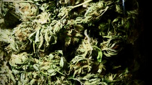 Police seize huge haul of herbal cannabis in Northern Ireland