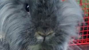 Neglected rabbits found dumped in dyke on Easter Monday