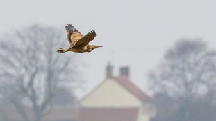 Twitchers from across Europe flock to Suffolk to see rare bird