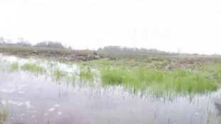 Lambs die and crops suffer in record wet spring