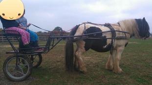 Stolen Carriage
