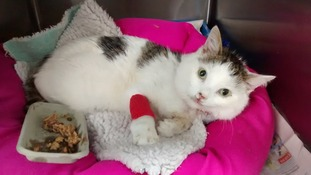 Cat survives 100ft fall after being 'thrown' from block of flats