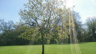 Anglia Weather: Very warm and sunny
