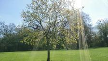 Sunshine over Cambridge