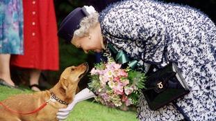 End of an era as the Queen's last Royal Corgi is put down