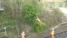 Contractors cutting down a tree