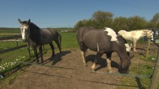 Equine crisis: Growing number of horses facing torture and neglect