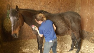 Horses being cared for at local charities