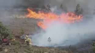 Major fire at Farnham Reserve in 2015