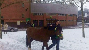 'Anyone lost a horse?' Unexpected visitor at Norwich's Carrow Road stadium