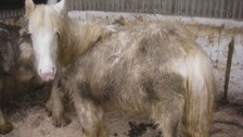 Horses left abandoned as cruelty crisis on the rise