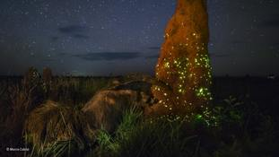 The Night Raider, which won a category of the Wildlife Photographer of the Year competition (Marcio Cabral)
