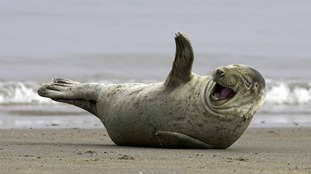 Coastguard called to 'dying dolphin' find 'live seal'