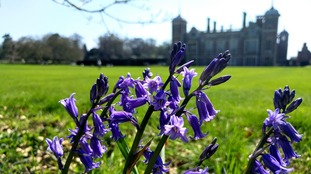 Bluebells at Blickling Hall on Norfolk on one of the hottest April days on record - 19 April 2018.