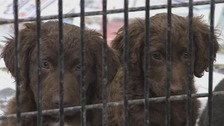 The dogs were transported from puppy farms in the Republic of Ireland