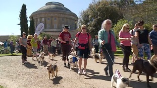 The walkers helping to provide hearing dogs for deaf people