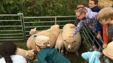 Kids with sheep