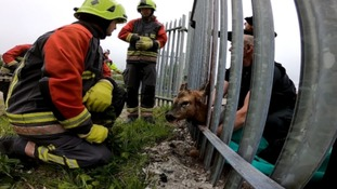 Deer rescued after getting trapped at train station