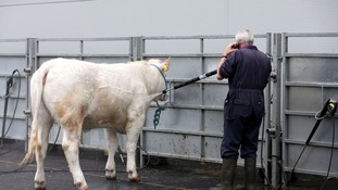 Balmoral Show draws tens of thousands of people to the four-day event.