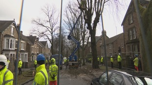 Stand off as trees are felled